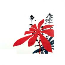 כרטיס ברכה - פרחים אדום/שחור